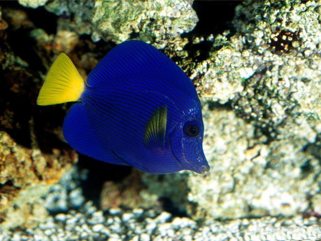 Animaux poissons tropicaux page 3 for Poisson tropicaux
