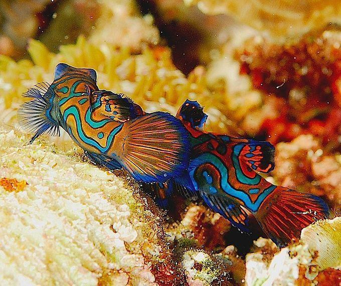 Belles images de poissons tropicaux for Poisson aquarium eau chaude