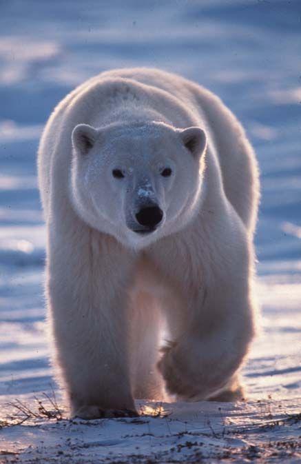 Dessin anim petit ours brun for Petit ours brun a la piscine