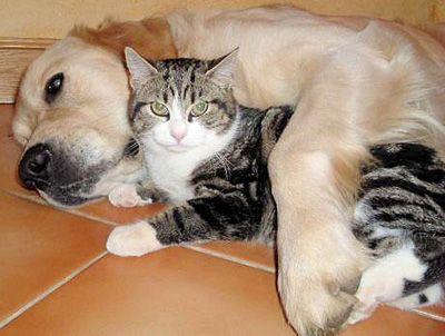 Animaux chiens et chats - Photo de chien et chat mignon ...