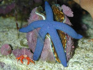 Animaux : étoiles de mer