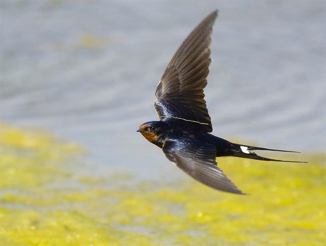 image Vole vole petit oiseau